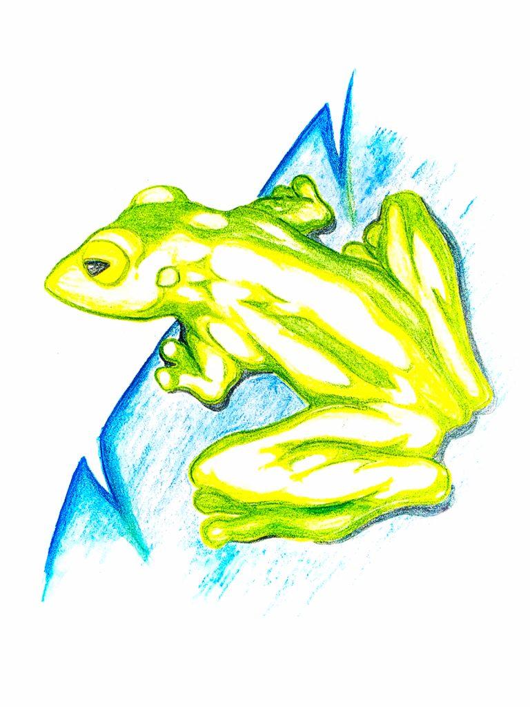 Frog | Alan Tamashiro